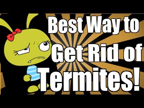 Best Way To Get Rid Of Termites