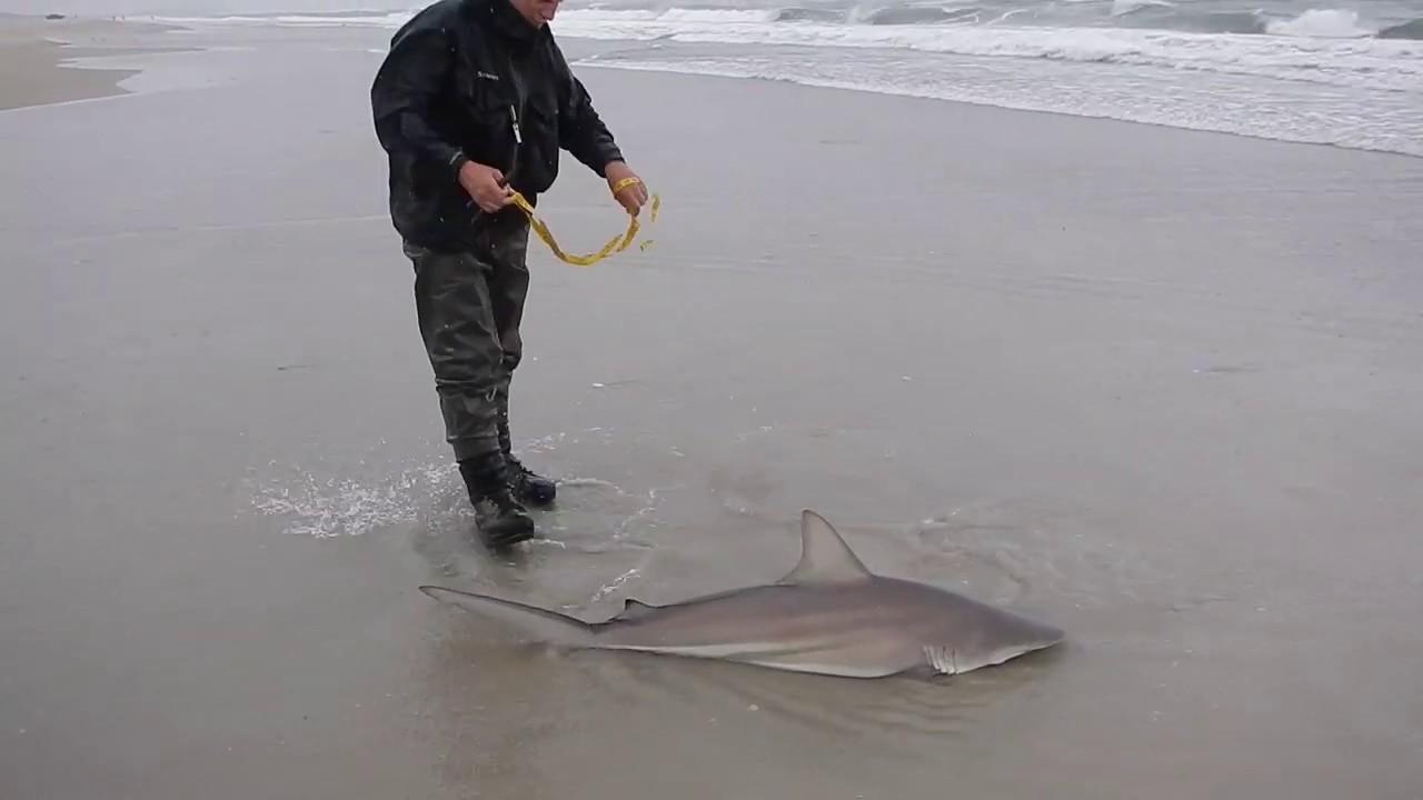 Outer Banks Shark Fishing 2018 Spinner Shark Youtube