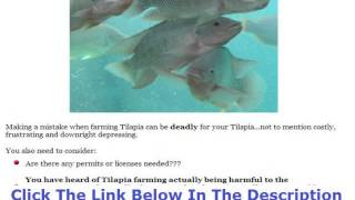 Tilapia Fish Farming In Jamaica +++ 50% OFF +++ Discount Link