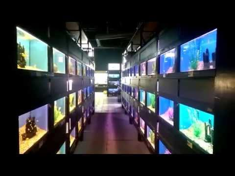 Big Al's Aquarium Supercentre Ottawa East Store Tour | Big Al's