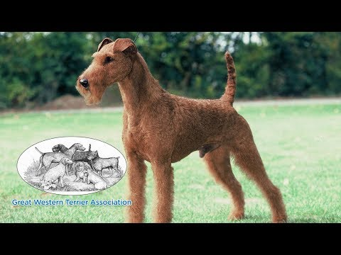 Great Western Terrier Association | NOHS Terrier Group & Terrier Group