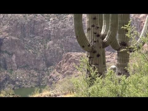 Salt River Cave Massacre: Skeleton Cave Explored (part 2 of 2)