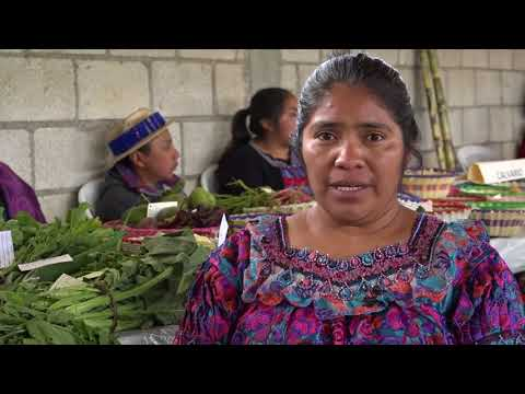 Farmers' Rights to Seed: Experiences from Guatemala