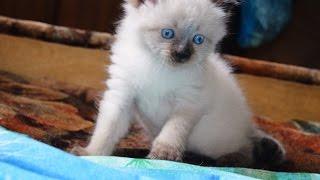 Кошачья семья 2015.05.30
