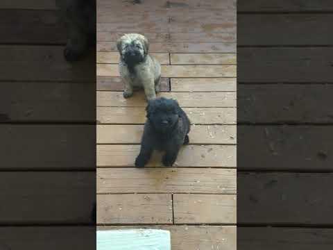 PuppyFinder.com : Meet the girls