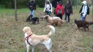 mini cani rando cours collectif jeux canins 6 octobre 2012 4 au chateau