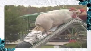 Свинья на горке Женщины тоже