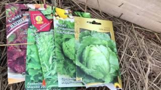 Выращивание рассады кочанного салата ( для получения ранней зелени )