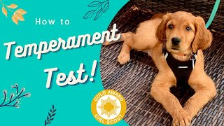How to Temperament Test Puppies! •Service Dog Prospect Tips Included•