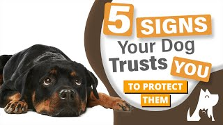 5 signs your dog trusts you to protect them