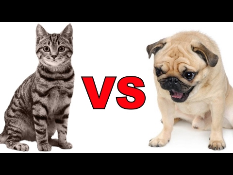 Cat VS Dogs Funny Videos Compilation 2017