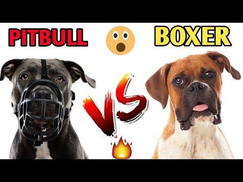Pitbull Vs Boxer / In Hindi / Dog comparison / Dog vs Dog / pitbull Vs Boxer
