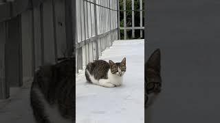 [고양이] 한쪽귀만 움직이며 식빵굽는 냥이 #short…