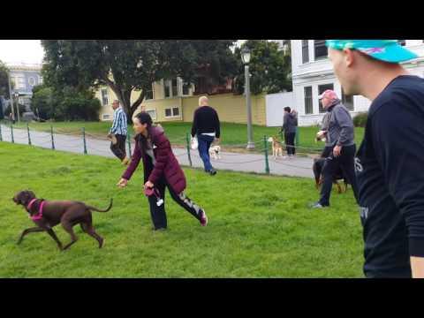 Man assaults dog in Duboce Park