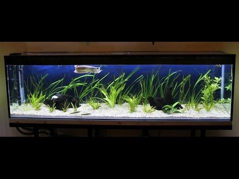 Live 2 Meter Aquarium