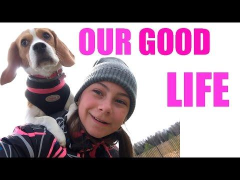 OUR GOOD LIFE!!!!! НАША ХОРОШАЯ ЖИЗНЬ BEAGLE//// БИГЛЬ