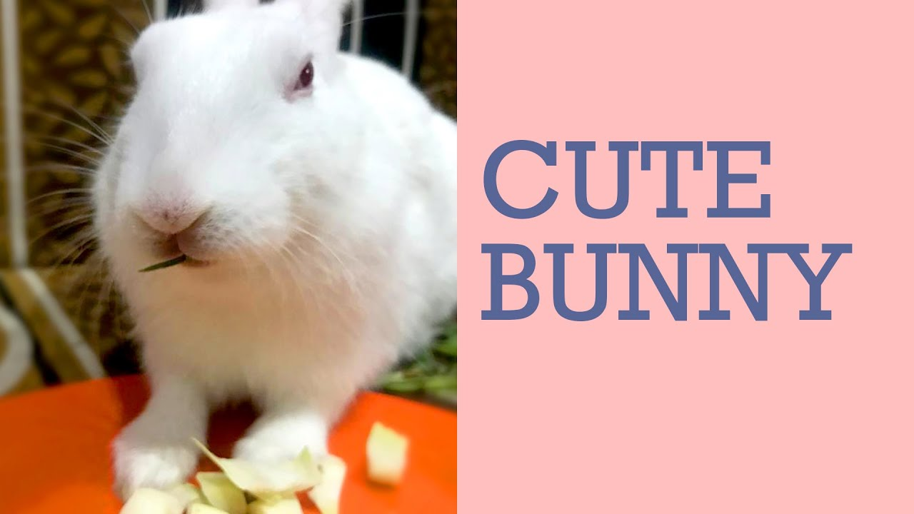 Cute and funny Rabbit Videos | Monu Baccha