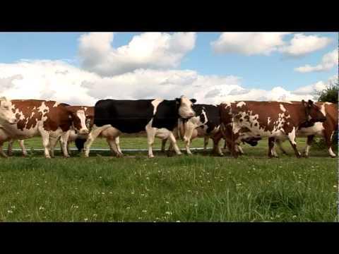 Calon Wen Organic Dairy Farm Story - Clovers Farm Pembrokeshire