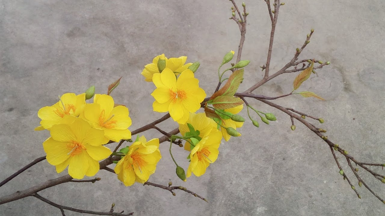 Abc Tv How To Make Yellow Apricot Blossom Paper Flower From Crepe
