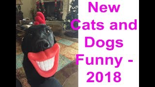 Cats and Dogs Funny Videos - 2018 || Animals Ticktock Funny Videos-2018 #animalfunny #animaltiktok