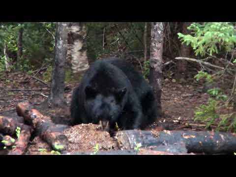 Pourvoirie L'esprit de l'ours