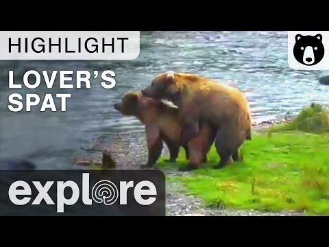 A Lover's Spat - Katmai National Park - Live Cam Highlight