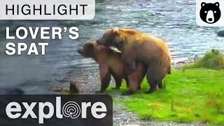 A Lover's Spat - Katmai National Park - Live Cam Highlight thumbnail