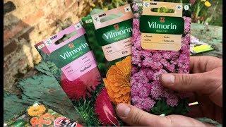 Jak wysiewać nasiona roślin jednorocznych