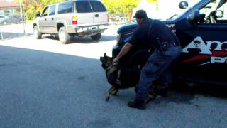 K9 Vehicle Assault and Clear