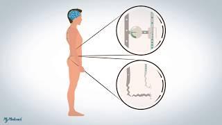 Douleurs neuropathiques et dysfonctionnelles: explication.