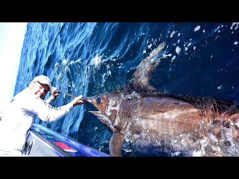 IFISH Broadbill Swordfish