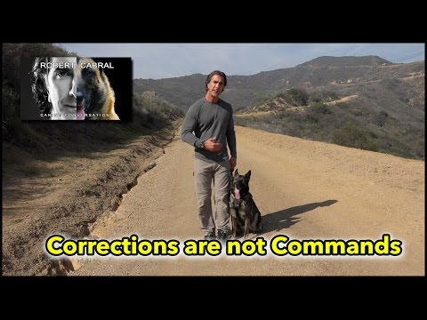 Corrections are Not Commands - Understanding Dogs Through Proper Dog Training