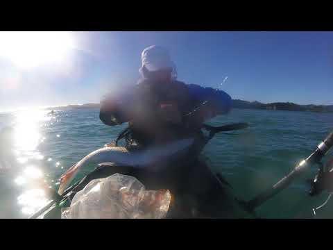 Snapper fishing taranaki 70cm+  released
