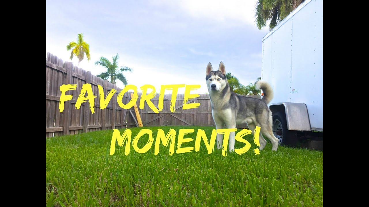 Gohan's Mid Year Favorite Moments!