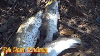 Hôm Nay Ra Vuông Tôm Dỡ Đóng  Chà Bắt Được Cá Qúa Khủng - T89