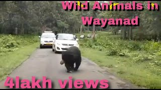 Wild animals in wayanad