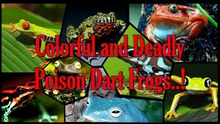 Worlds most Colorful and Deadly Poison Dart Frogs