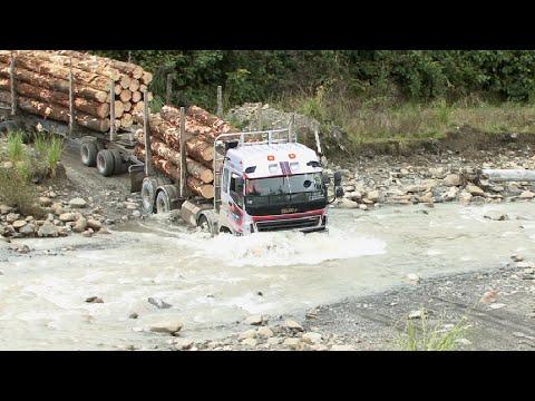East Coast Forest Industry Gisborne New Zealand