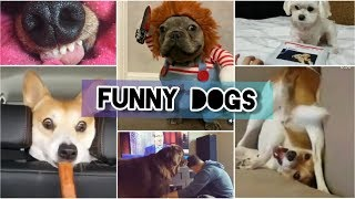 Funny and Cute Dogs - Funniest Dogs Compilation 2019 # 2