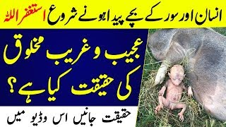 Human And Animals Hybridisation | Breed of Man and Pig by Scientists | Islamic Solution