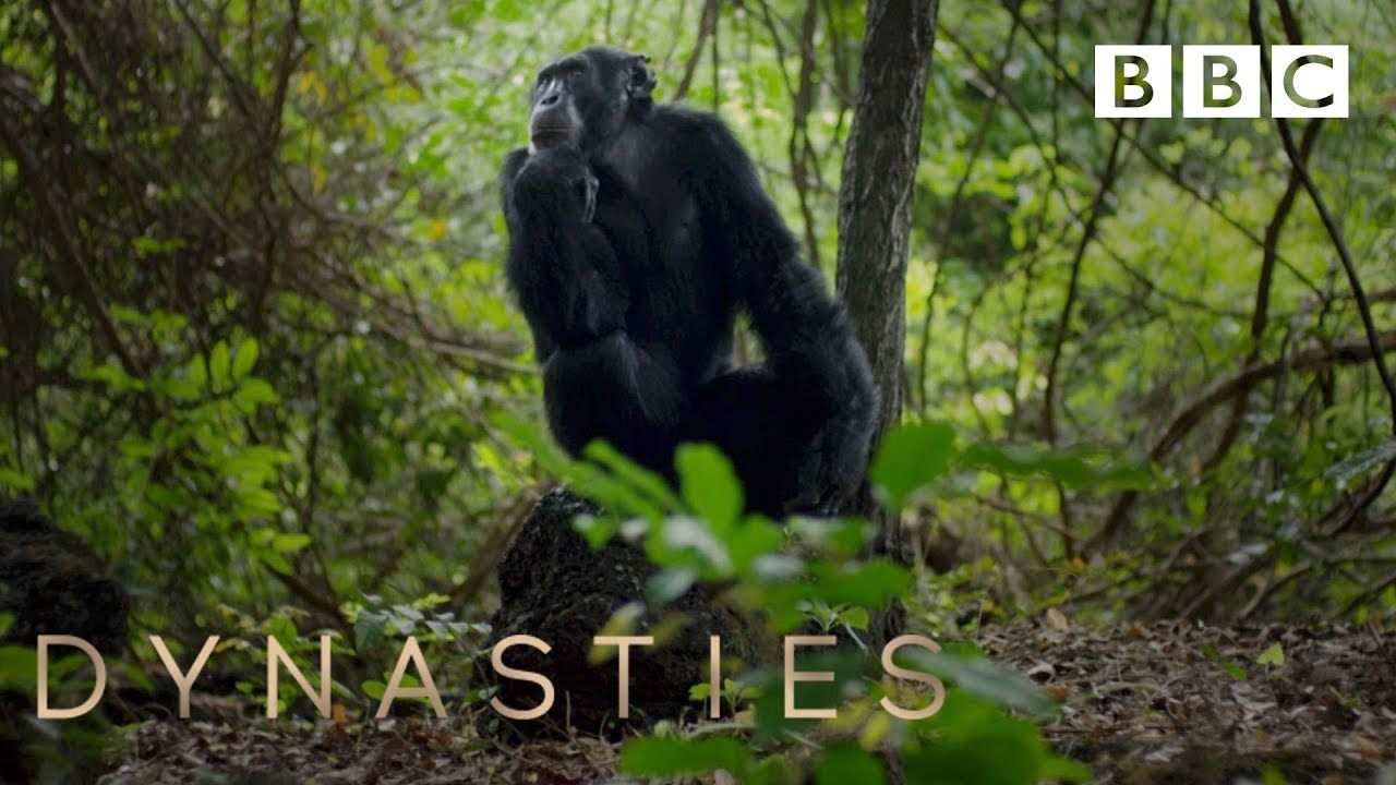 Dynasties Exclusive Preview From The First Episode Bbc Youtube