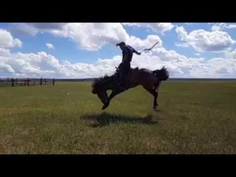 Как обучают лошадей верхом видео