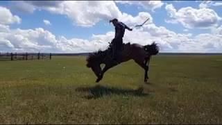Мастер класс по обучению диких лошадей от монгольской группы каскадеров #ТЭНГЭРИИНЧОНО. 1