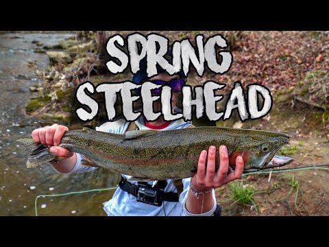 Micro Creek Ohio Steelhead Fishing!!