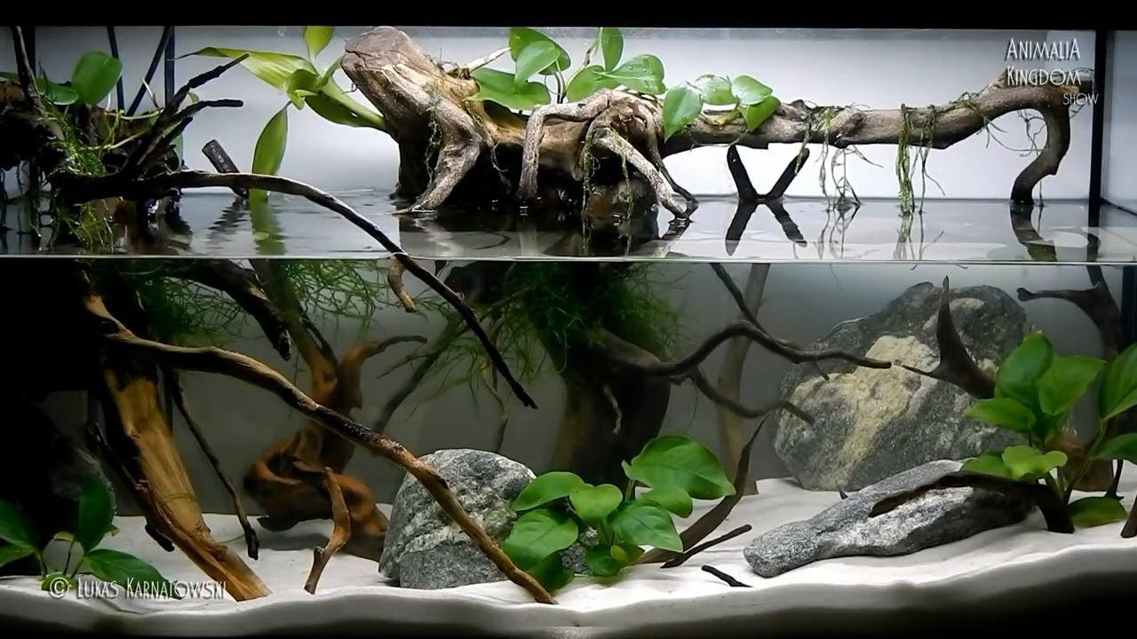aquascape setup series/root of a tree - animalia kingdom show