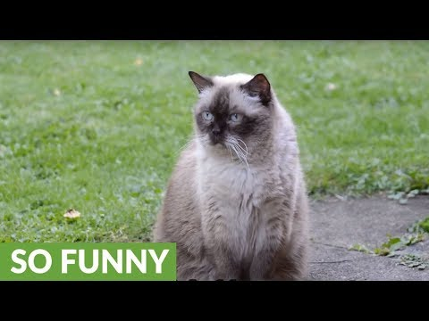 6 signs you are actually a cat