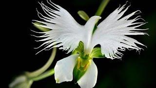 Самые необычные и удивительные цветы