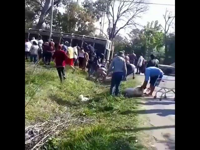 Volcó un camión con Cerdos en el barrio #ElManantial.