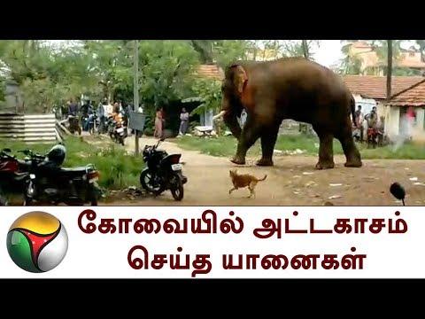 கோவையில் அட்டகாசம் செய்த யானைகள் | Elephant