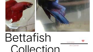 Bettafish Collection